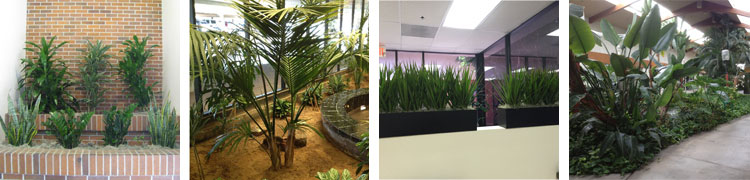 Atriums and Custom Planters