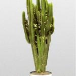 Euphorbia - Cactus