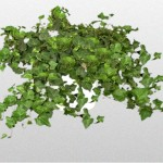 Helix - Ivy