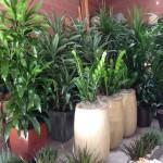 Atrium & Custom Planters